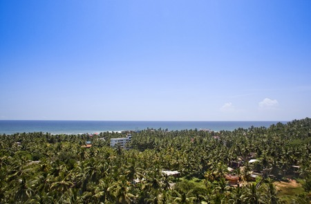 kovalam: Palm trees on the beach, Kovalam, Kerala, India