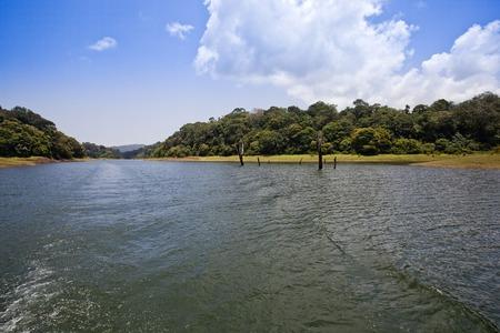 periyar: Trees in a forest at the lakeside, Thekkady Lake, Thekkady, Periyar National Park, Kerala, India Stock Photo