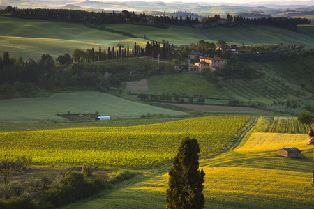 Bäume in einem Feld, Siena, Provinz Siena, Toskana, Italien Standard-Bild - 33377625