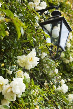 Laterne mit Blumen, Ravello, Amalfiküste, Salerno, Kampanien, Italien Standard-Bild - 33377198