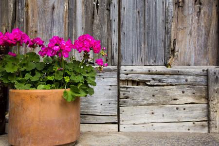 Close-up von einer Topfpflanze, Ravello, Amalfiküste, Salerno, Kampanien, Italien Standard-Bild - 33377199