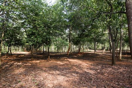 andhra: Kambala Konda Eco Tourism Park, Majjisrinath, Vishakhapatnam, Andhra Pradesh, India Stock Photo