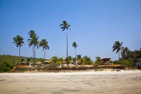 Palmen am Strand, Siolim, Bardez Taluka, Goa, Indien Standard-Bild - 33377262