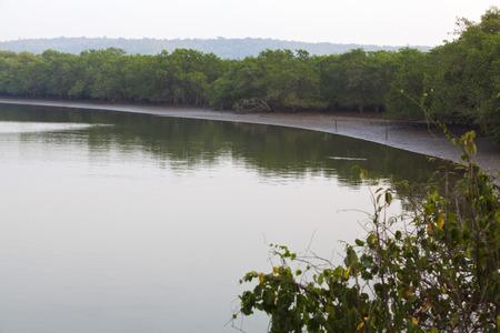 Reflexion von Bäumen auf dem Wasser, Goa, Indien Standard-Bild - 33377299