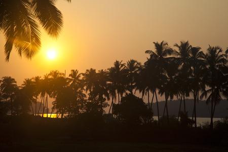 Silhouette of palm trees at dusk, Goa, India Stok Fotoğraf
