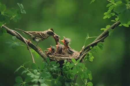 bird nest: Birds