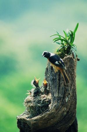 bird nest: Birds