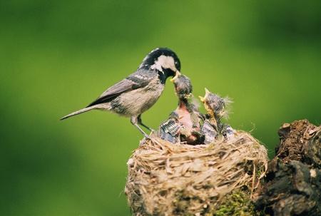 birds in tree: Uccelli Archivio Fotografico