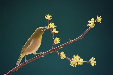 Birds Stock Photo - 11879929
