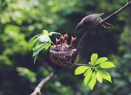 nido de pajaros: Aves