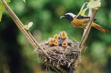 �rboles con pajaros: Aves