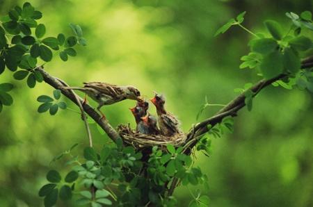 uccelli su ramo: Uccelli Archivio Fotografico