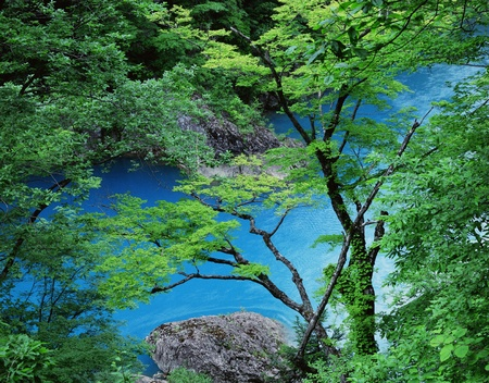 clearness: Nature scene