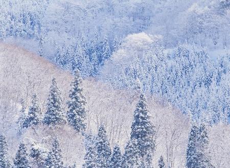 Snowscape photo