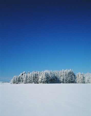 clearness: Snowscape