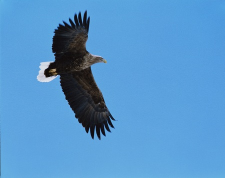 clearness: Eagle