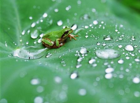 Frog Reklamní fotografie