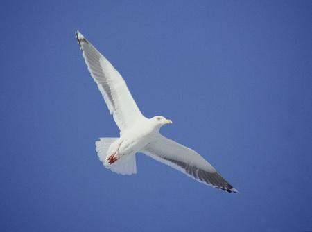 clearness: Bird Stock Photo