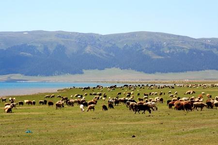 jokul: Sayram Lake,Xinjiang Province,China风景