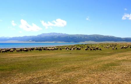 Sayram Lake,Xinjiang Province,China风景 Stock Photo - 11894459