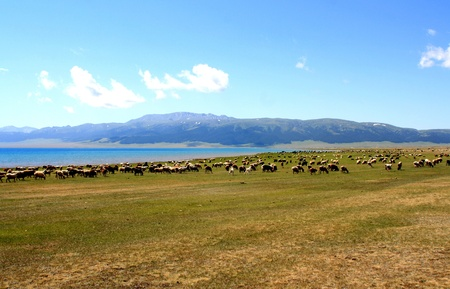 Sayram Lake,Xinjiang Province,China风景 Stock Photo - 11894459