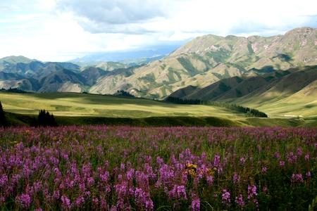 xinjiang: Xiaerxili, la province du Xinjiang, en Chine