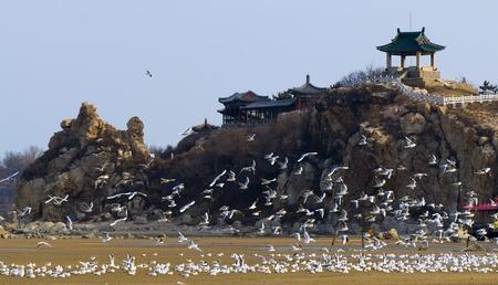 Beidaihe,Hebei Province