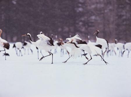 Animal life photo