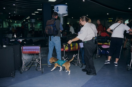 Sniffer dog with officer in an airport
