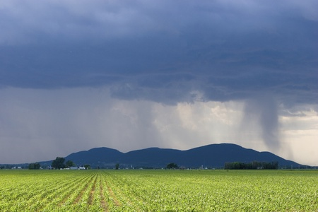 maize cultivation: Storm over corn field