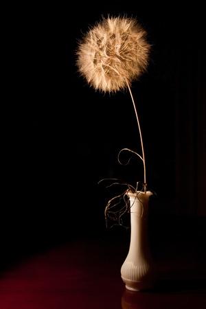 flores secas: Blowball Still Life