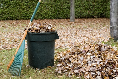 cleanup: Autumn leaves in a garbage can - Horizontal  Stock Photo