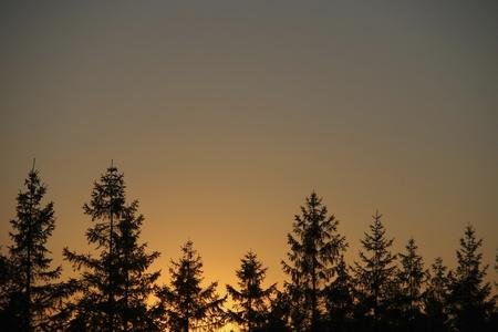 evergreen forest: Orange evergreen sunset silhouette