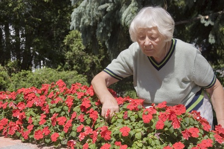 active adult community: Senior woman flower garden