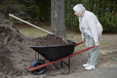 Senior woman carrying dirt in a wheelbarrow  photo