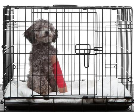 pierna rota: Perro enjaulado, con fractura en la pierna con un yeso