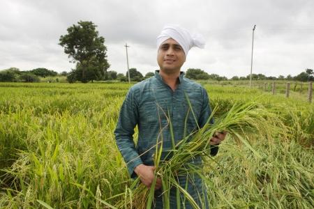 indian village: Farmer in paddy field