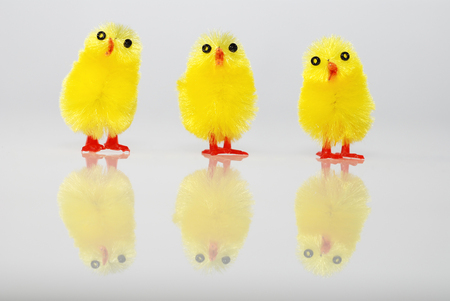 yellow easter chicks group
