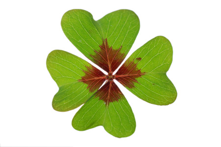 leaved: green isolated leaved shamrock