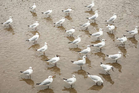 mire: seagulls live in mangrove of thailand Stock Photo