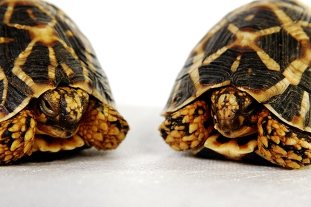 Two tortoises sitting next to each other Stock Photo - 11609802