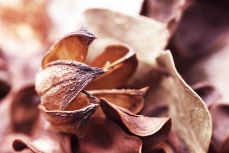 Scent bouquet. Potpourri of dried flowers Stock Photo - 12642869