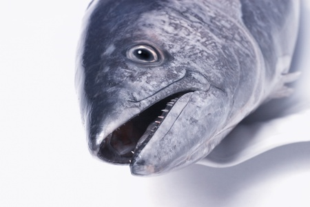 Head of a Fish on a White Plate Stock Photo - 12642141