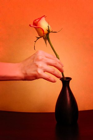 fair complexion: rose with a vase