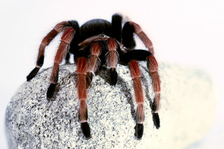 dangerous ideas: A black and red spider crawling on a stone