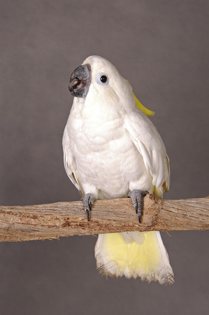 talkative: A white parrot standing on a branch LANG_EVOIMAGES