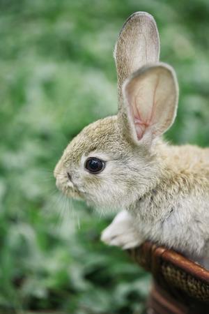 urban wildlife: Rabbit in a basket at the park