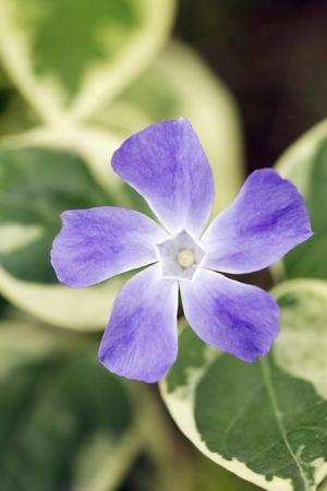 purple flower: Purple flower LANG_EVOIMAGES