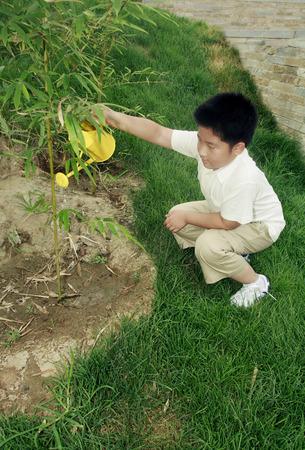 regar las plantas: Plantas de riego del ni�o