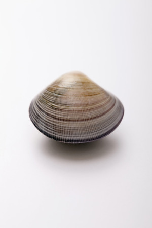 clam: Clam LANG_EVOIMAGES